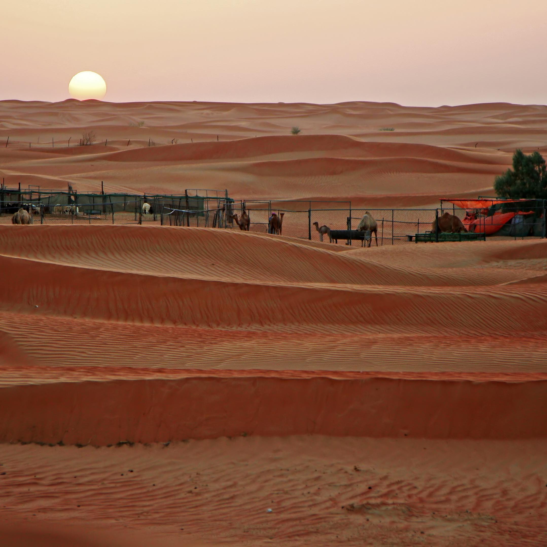 Dubai, Safari por el desierto