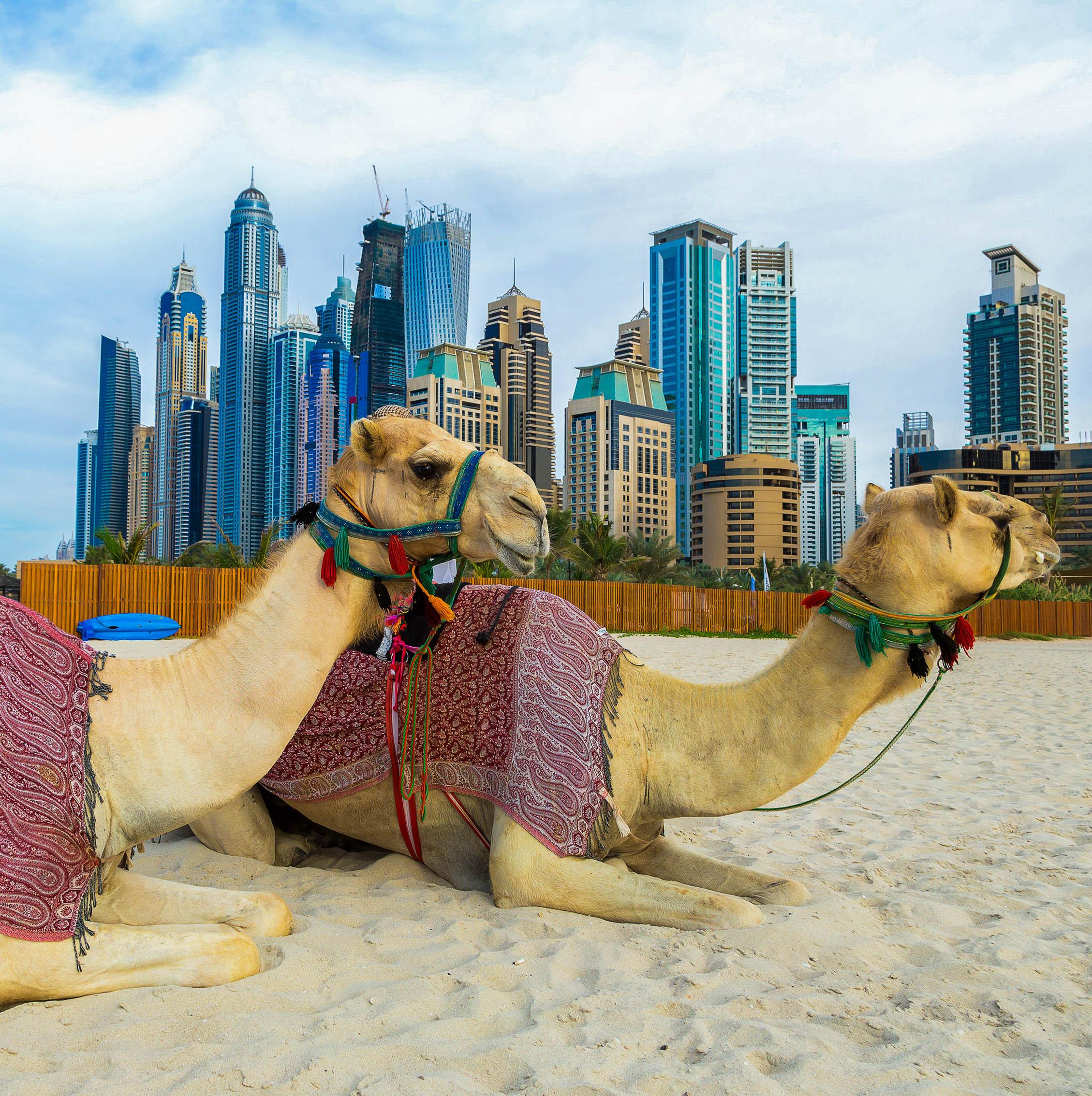 Dubai: City Tour + Safari por el Desierto
